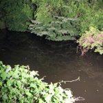 【事故】宮城県大衡村の沼に転落で釣りの親子3人が死亡…現場の写真がやばい…(画像あり)