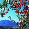 【早死】青森県が「日本一の短命県」になった原因がヤバすぎる・・・