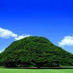 有名CM「この木なんの木」の「日立の樹」の維持費がヤバすぎるwww(画像・動画あり)
