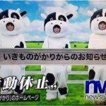 【悲報】いきものがかり活動休止、NHKで放送事故wwwwwwwwww