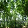 鶴見緑地公園で竹30本伐採の怪事件→ 犯人の正体は意外にも…