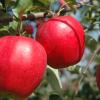 【悲報】若者のリンゴ離れの理由www食べない人急増wwwwwww