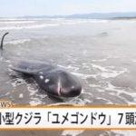 【訃報】九州のクジラやばい…大地震の前兆だろこれ…(画像あり)