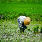 【悲鳴】農家さん終了のお知らせ・・・農業業界の現状が・・・
