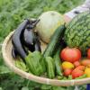 【悲報】日本の野菜に衝撃事実…中国産は危険とか言ってたネトウヨどうするの?