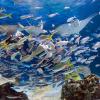 魚が大量死のサンシャイン水族館、大水槽の現在がやばい…(画像あり)