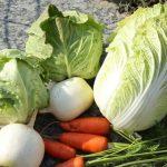 【高騰】野菜、とんでもない値段になる・・・