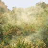 【衝撃】今年のヒノキ花粉に衝撃事実、とんでもないことになっていたwwwwwwww