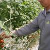 農家「トマトが真っ赤になったよ」→これにどう答えるかでコミュ力の有無が分かるらしいwwwww