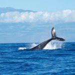 【地震前兆?】東京湾にクジラの死骸…これは…(画像あり)