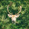 【衝撃】明らかに合成っぽい目をした鹿が見つかるwwwww(画像あり)