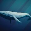 【衝撃】クジラを食べてはいけない理由、判明するwwwww(画像あり)