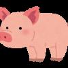 【朗報】マイクロ豚がマジで可愛いと話題に→ご覧くださいwwwww(動画あり)
