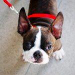 【悲報】YouTuber「保健所で殺処分寸前の子犬を助けた!」→ 犬に衝撃の事実発覚wwwww(画像あり)