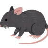 【仰天】とんでもないネズミが発見されるwwwwもうこれピカチュウだろwwww