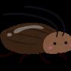 【悲報】ゴキブリ専門家、衝撃発言・・・・・・