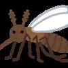 【速報】刺されると1/5の確率で死ぬ殺人蚊をご覧ください・・・