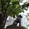 【愕然】暴力団、渋谷ハチ公前で高校生YouTuberを恐喝した結果・・・・・