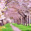 【桜を見る会】野党「ニューオータニ5千円は安すぎる!」→ 出された料理が判明、衝撃の結末に・・・