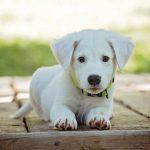 【悲報】金正恩さんが韓国にプレゼントした犬の末路wwwwwwww