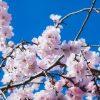 【新型コロナ】「春になれば抑制される」は本当か…専門家に聞いてみた結果