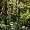 【悲報】新型コロナ「南米アマゾンの最奥地まで行ってみた」