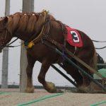 【驚愕】ばんえい競馬、トンデモナイことが起きるwwwwwww