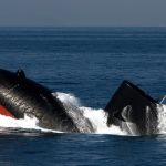 【驚愕】韓国の最新鋭潜水艦が試運転した結果→残念すぎる末路にwwwwwwwwwwww